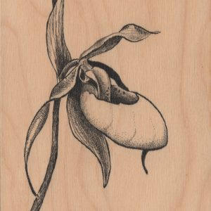 Lady Slipper_5x7wood-Pen